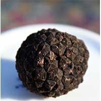 truffle200